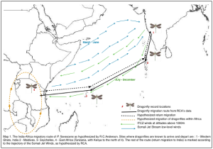 Globe-skimmer-migration-pathway-by-Charles-Anderson